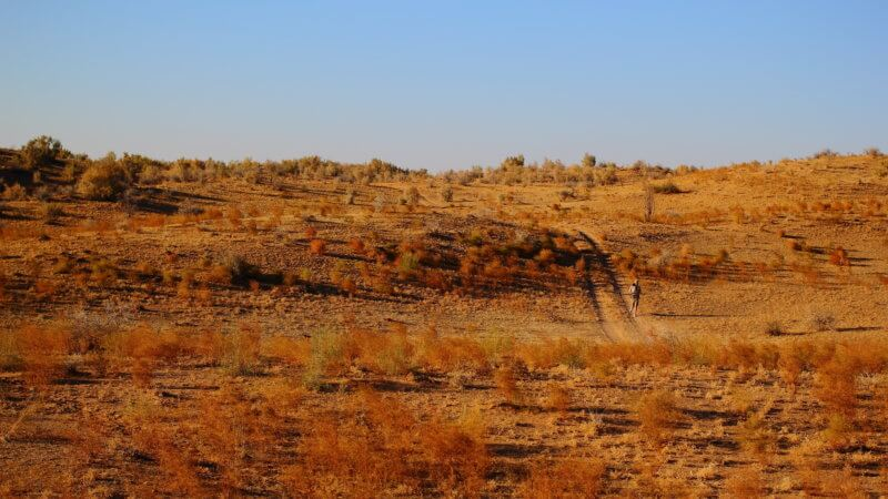 Far and wide shot of a runner descending over a set of scrubby desert dunes.