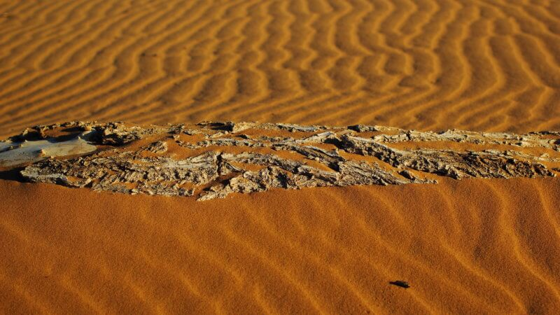 A desiccated wood log emerging from a sand dune.
