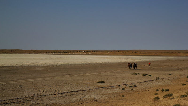 Wide shot of a runner and two camels traversing a dried-up salt pan in the Kyzyl Kum.