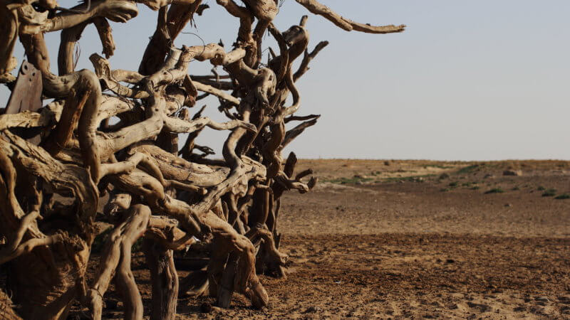 Close-up photo of a horse pen fence made from dried-up desert wood.