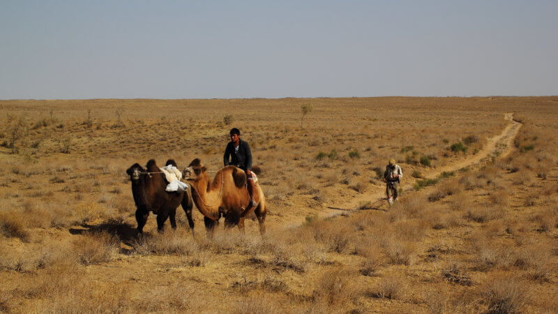 Mid-range shot of a man riding two camels in the Kyzyl Kum and a runner following behind.