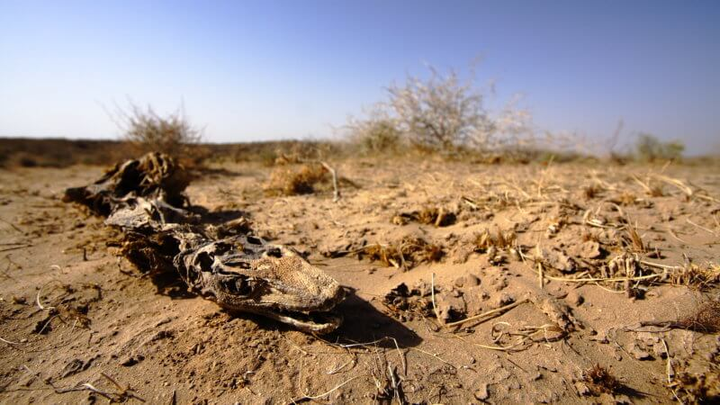 The skeleton and desiccated skin of a desert lizard.