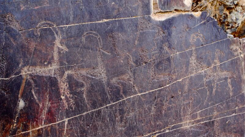 Petroglyphs of antelope carved into a brown rock.