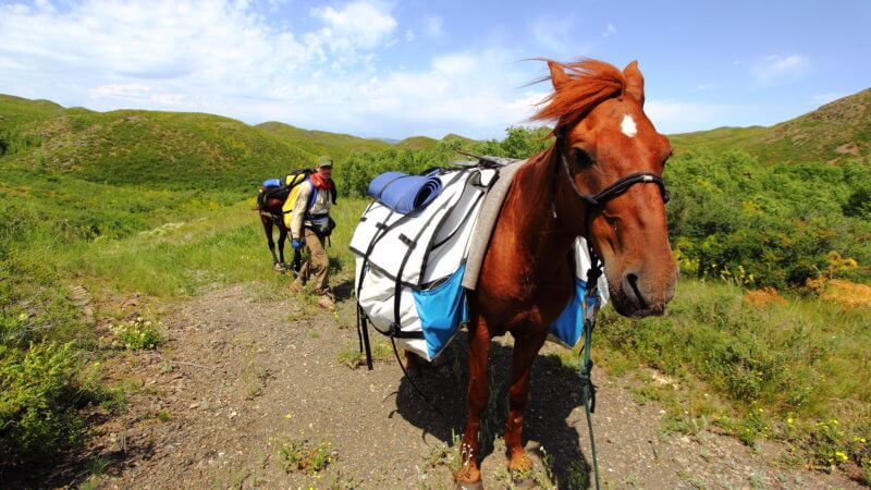 A red-coloured horse carrying pack bags walks past the camera in Kazakhstan's countryside.