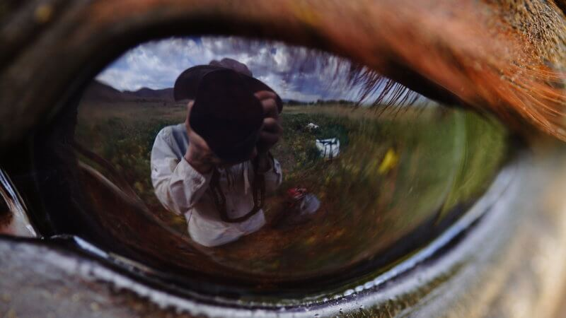 Very wide angle and close photo in East Kazakhstan of a horse's eye.