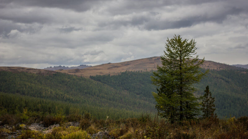 Landscape image of western Tuva on an overcast day with a pine forest.