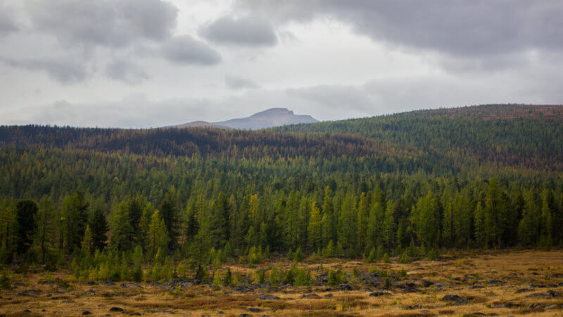 A landscape shot of a Tuvan taiga forest.