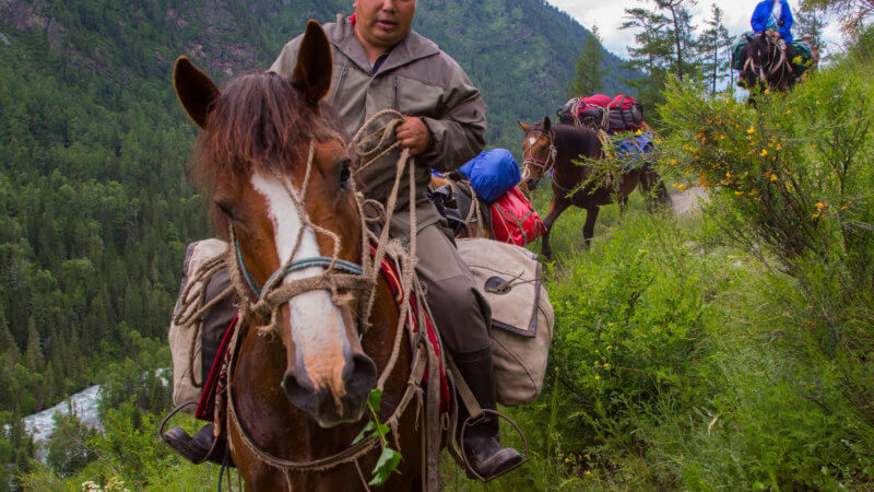 An Altai horseman wearing khaki clothing rides past the camera as his horse chews leaves.