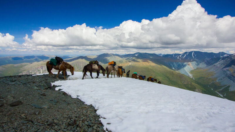 A chain of horses carrying equipment descends down a steep snow slope.
