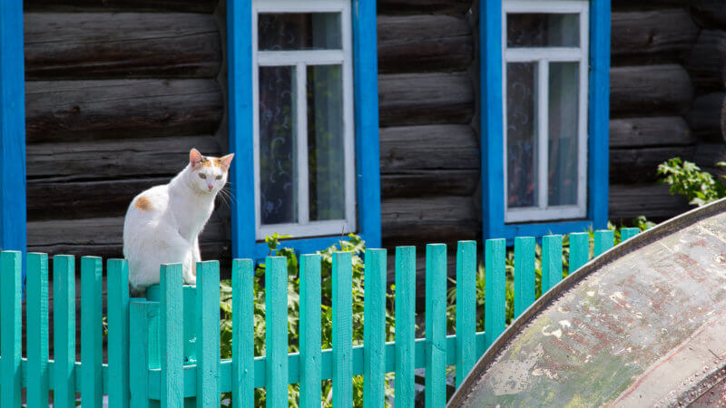 A white cat sits on a green fence outside of a log cabin with blue window frames.