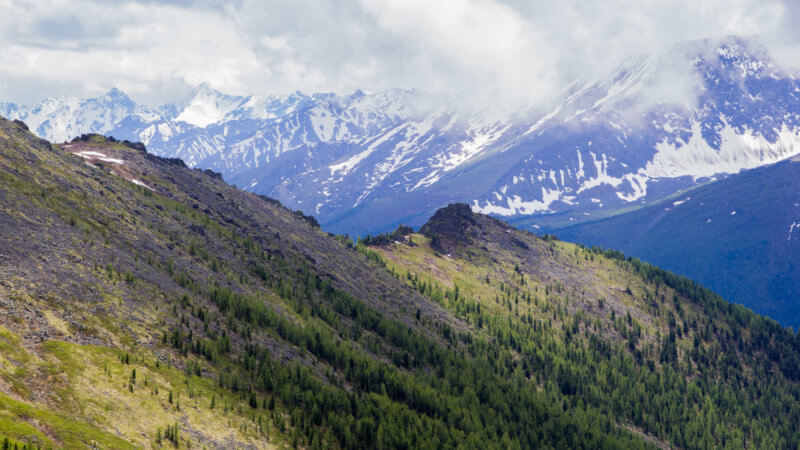 A forested ridgeline in the foreground and snowy alpine Altai peaks in the background.