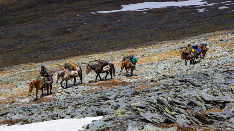 Four horses carrying equipment are led by one man through rocky terrain.