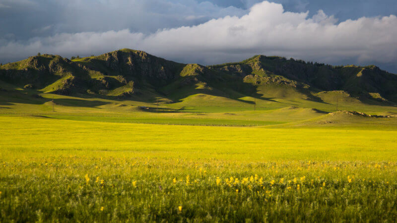 A vast plateau of yellow flowers overlooks rocky hills bathed in late afternoon sunshine.