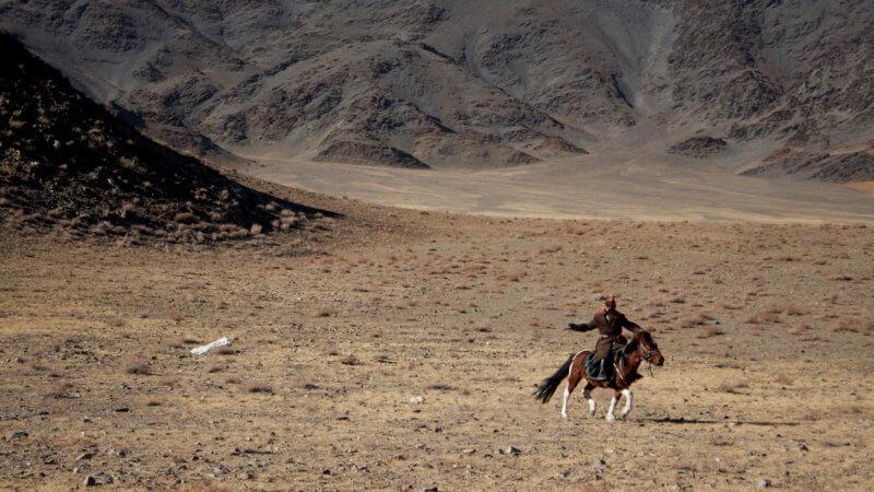 A Kazakh eagle hunter on horseback training his eagle to catch a pelt of wolf fur.