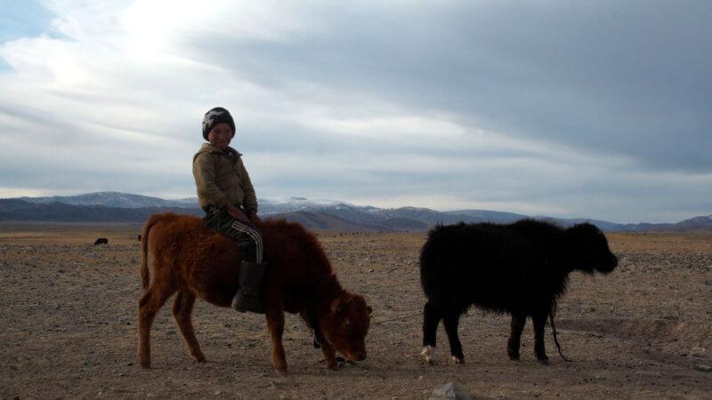 A little Mongolian Kazakh boy sat on top of a baby yak smiling.
