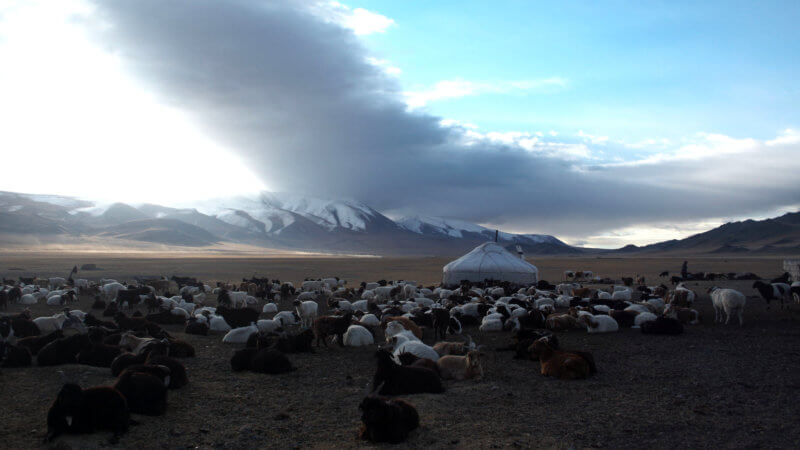 Hundreds of goats stood in front of a yurt with a big cloud overhead.