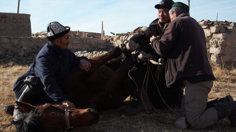 Three Kazakh guys hold a horse on the ground that's tied up with rope.