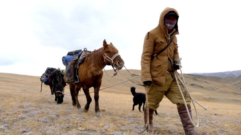 Alpamys towing horse and walking over a mountain top. Dressed in khaki clothing and boots.