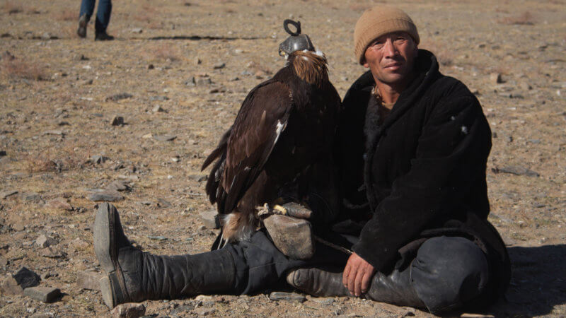 A Kazakh eagle eagle looks at the camera, sat on the ground, with one leg crossed.