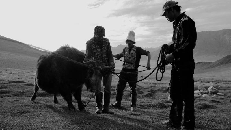 Three men stood around a yak which has its horns tied up with rope.