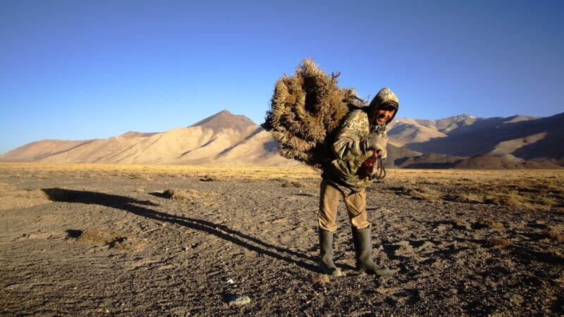 A Tajik-Kyrgyz man wearing camouflage carries a big bundle of teresken shrub on his back.