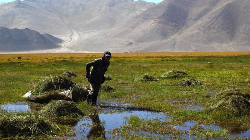 A farming man drags a sled of cut grass across a flooded swampy plain in eastern Tajikistan.