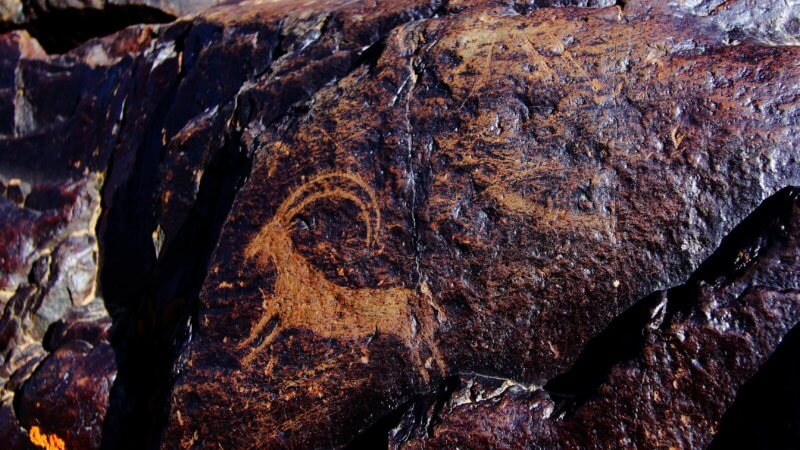 Close-up photo of a long horned goat petroglyph.