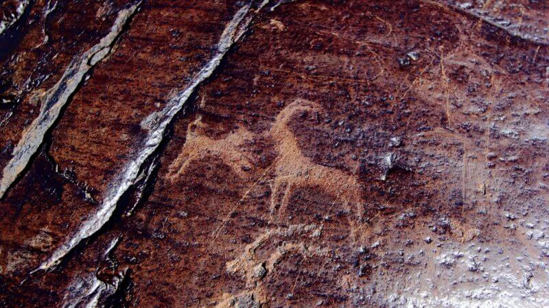 Close-up photo of a petroglyph on shiny graphite dog. A small dog is barking at an ibex.