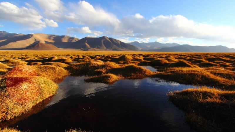 Golden, grassy humps stretching across a big plateau and filled with mini ponds.