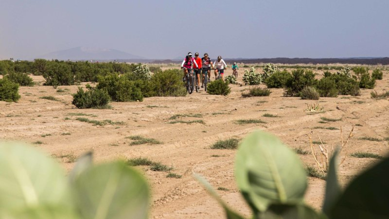 A group of cyclists on a sandy desert cycling between small bushes.