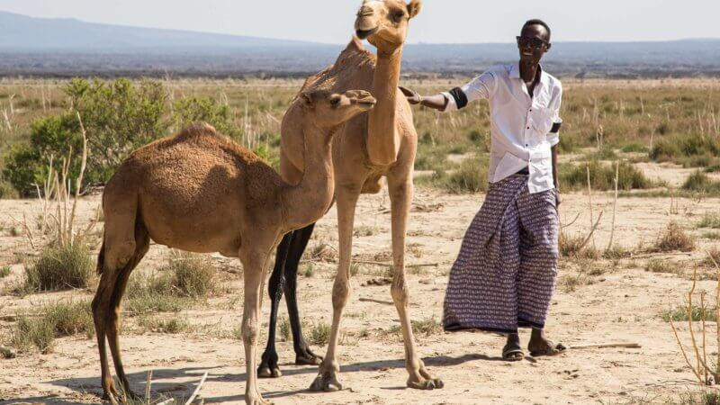 An Ethiopian man with two camels in the Danakil Depression.