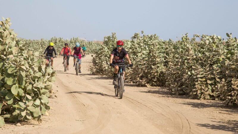 Four mountain bikers riding across a stretch of sand and between green bushes.
