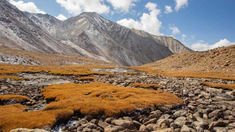 A dry stream bed surrounded by golden coloured grass and snow covered distant mountains.