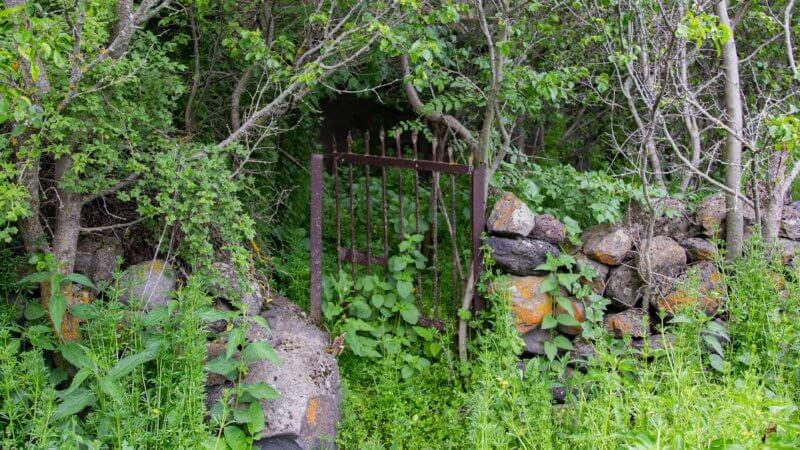 A rusted gate leading to an overgrown and abandoned garden.