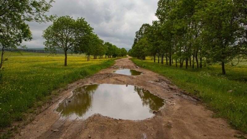 A waterlogged dirt road cuts through agricultural fields lined by rows of evergreen trees.