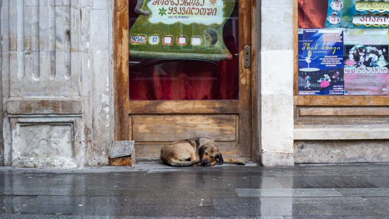 An older dog curled up and sleeping in a dry doorway in Tbilsi, trying to avoid the rain.