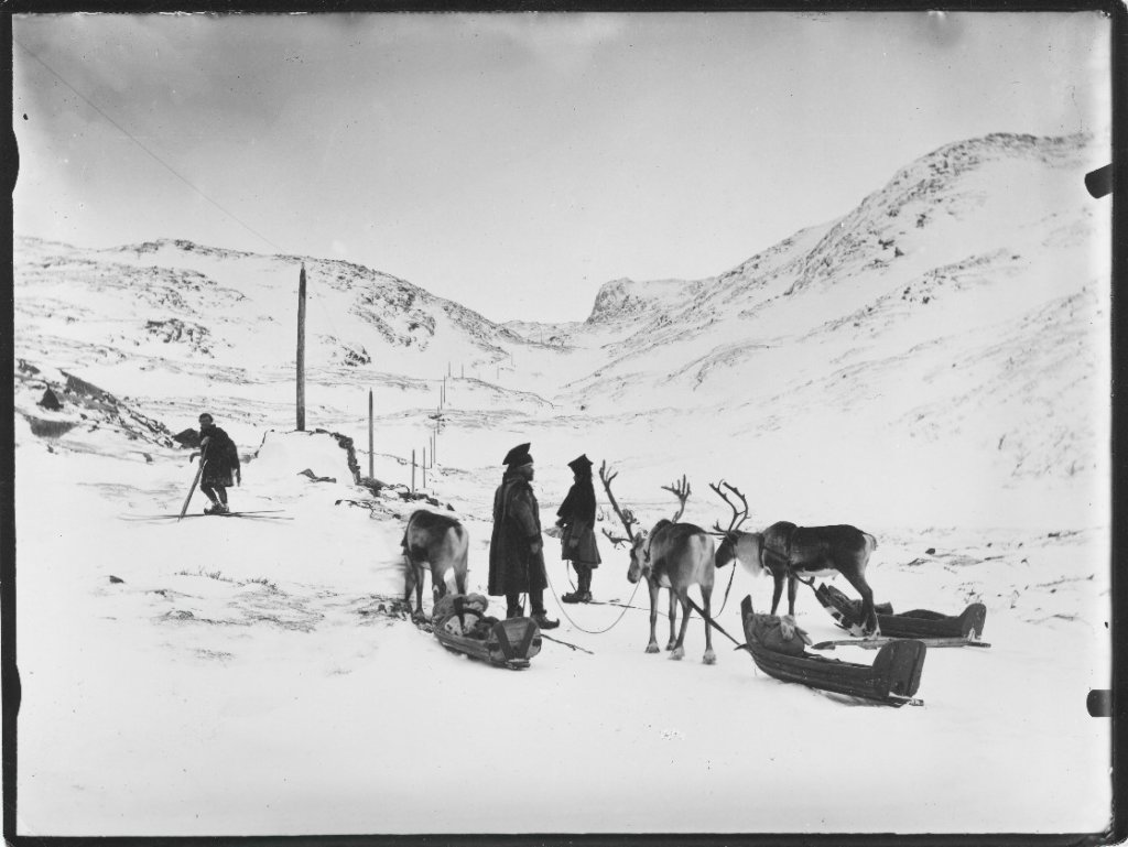 Historical photo Sami herders skiing and towing sledges with their reindeers in a Sør-Varanger valley.