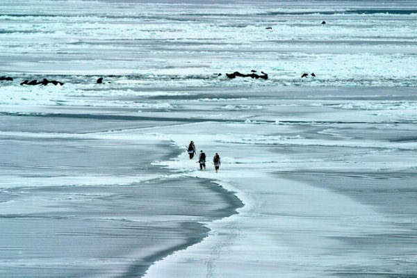 Ice conditions on the Bering Sea: A joint research team from Chukotka and the U.S. Geological Survey ventures out near St. Lawrence Island, to study the local walrus population. Photo: USGS